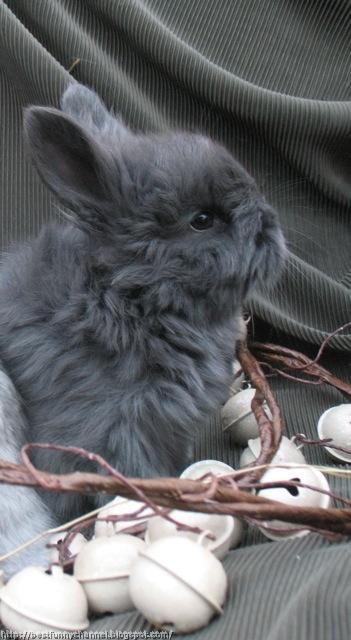 Nice gray bunny.
