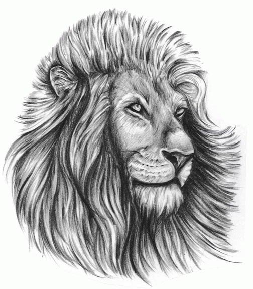 Lion Tattoo Pics