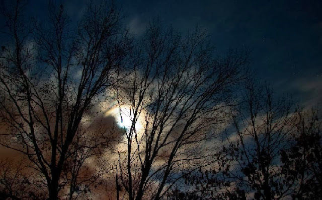 Moon, Night, Tree & Clouds
