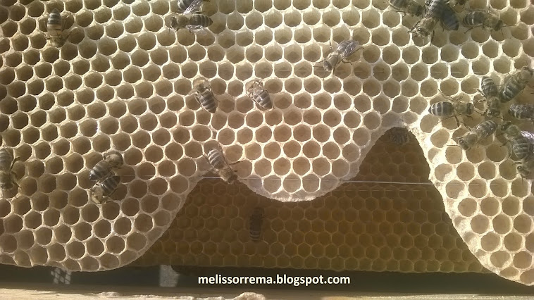 κηφηνοκέλια απο 100% μελισσοκέρι