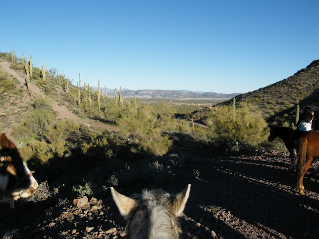 Horse riding in the Sonora Desert surrounded by cacti