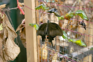 taman kupu kupu