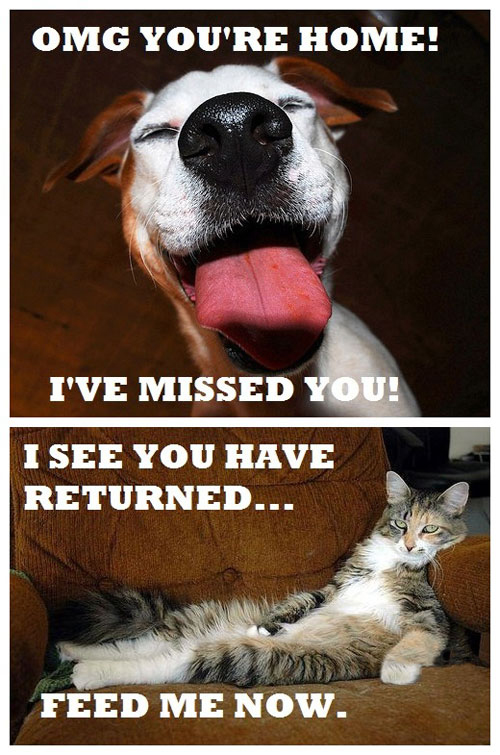 Difference Between Dogs vs Cats