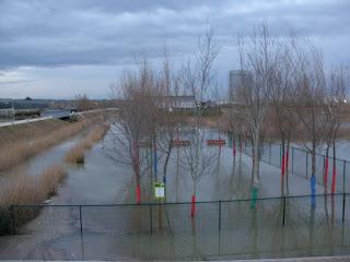 Agility zona canina Parque del Agua (Luis Buñuel) Crecida del río Ebro 22/01/2013 Zaragoza