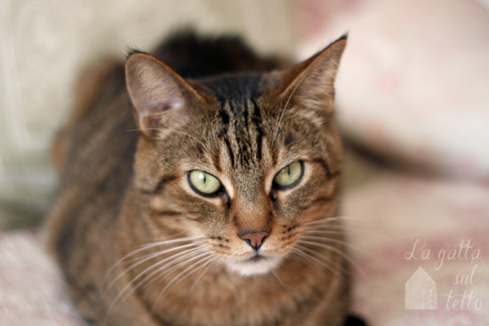 la gatta sul tetto milano
