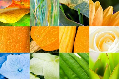 Colección de plantas, flores y verduras (12 imágenes closup)