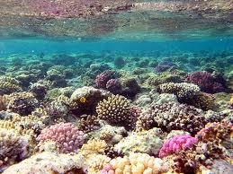 melestarikan trumbu karang