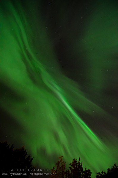 Northern Lights. Photo © Shelley Banks, all rights reserved.
