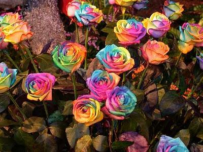 Bunga mawar berwarna-warni
