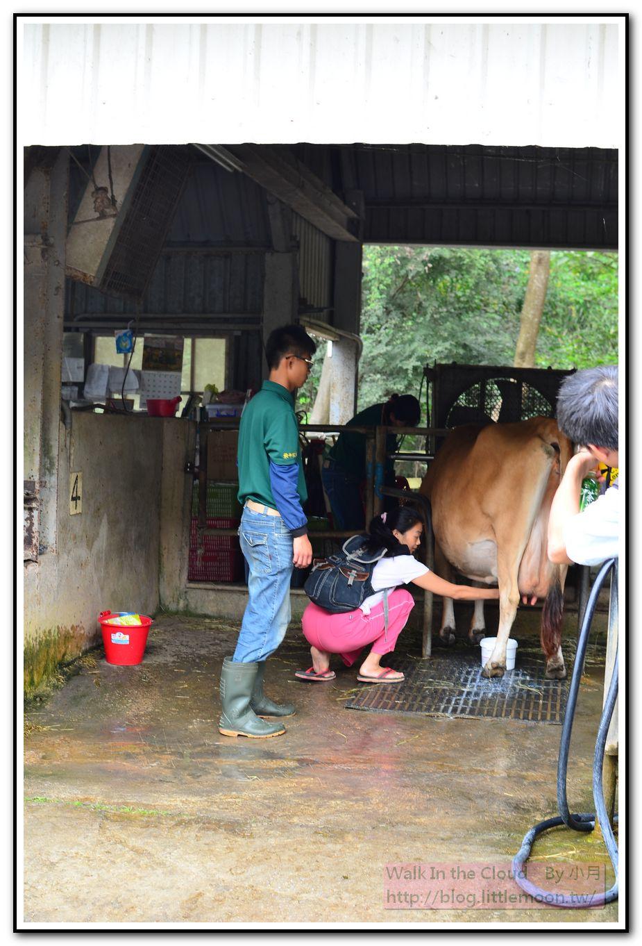 乳牛媽媽的家之擠牛奶體驗區