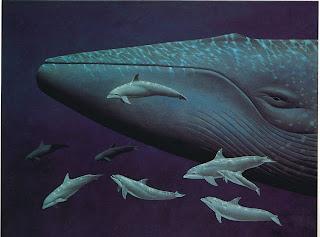 Gambar Ikan Paus Biru