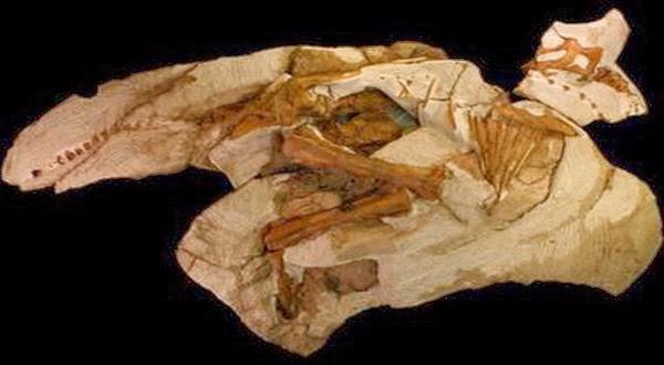 Fosil Dinosaurus Aneh Ditemukan Oleh Seorang Remaja