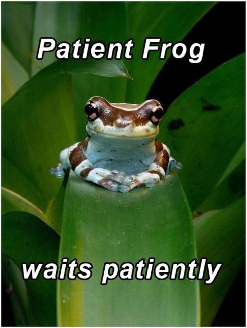 Patient Frog - Waits Patiently