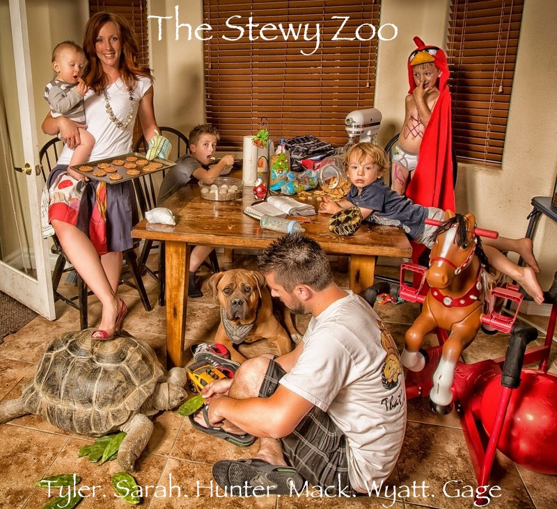 The Stewy Zoo