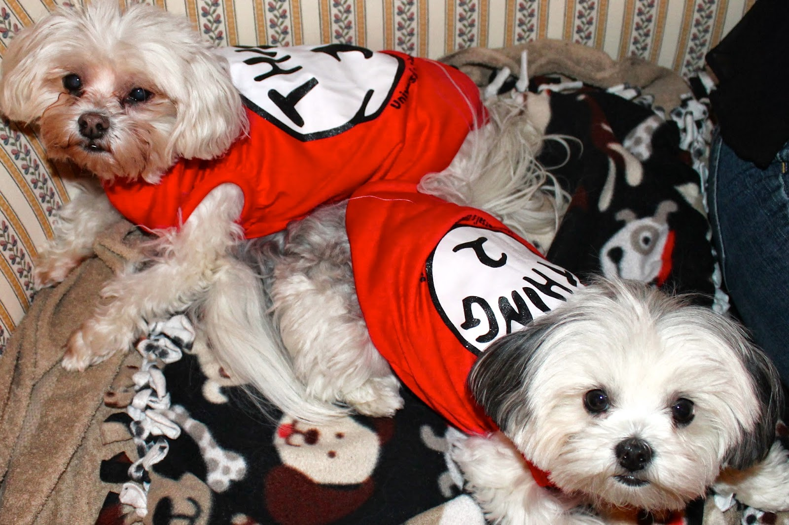 dogs in Thing 1 and Thing 2 shirts