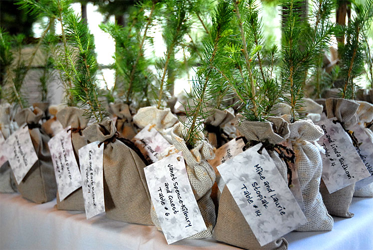 Diy Wedding Gift Tree : Tamryn Kirby: Delicious DetailsFragrant Herbs