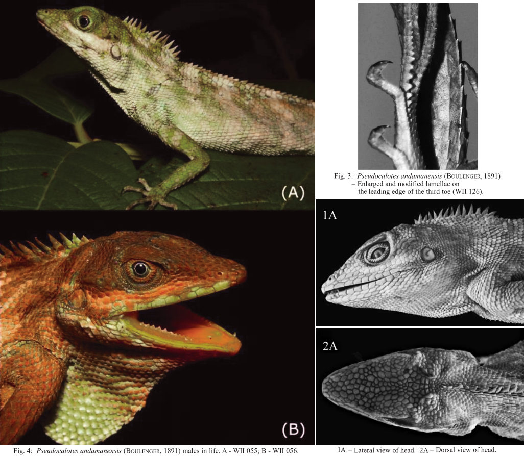 a description of reptile taxonomy in herpetology A herpetologist is someone who specializes in the study of reptiles and amphibians if it slithers around on its belly, a herpetologist will know what it is.