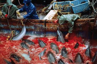 - La matanza anual de delfines en Japón