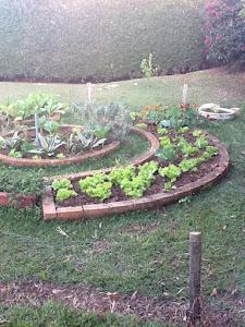 Projeto Horta em casa