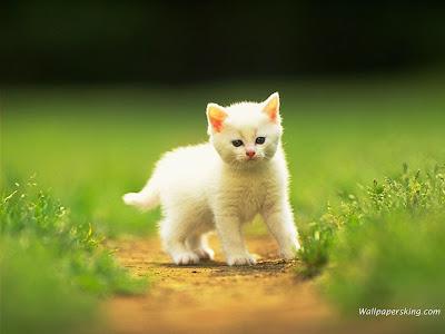 فيديو-قطة-مضحكة-جميلة-لطيفة
