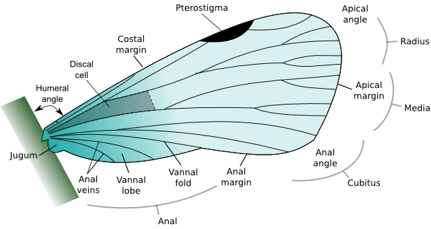 ... Wings Analogous Structures as well as evidence for evolution worksheet