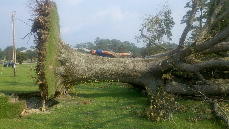"Planking,"" on a tree knocked down by Hurricane Irene. Can you see the"