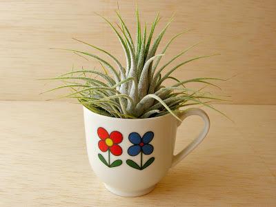plante sans racine julie adore