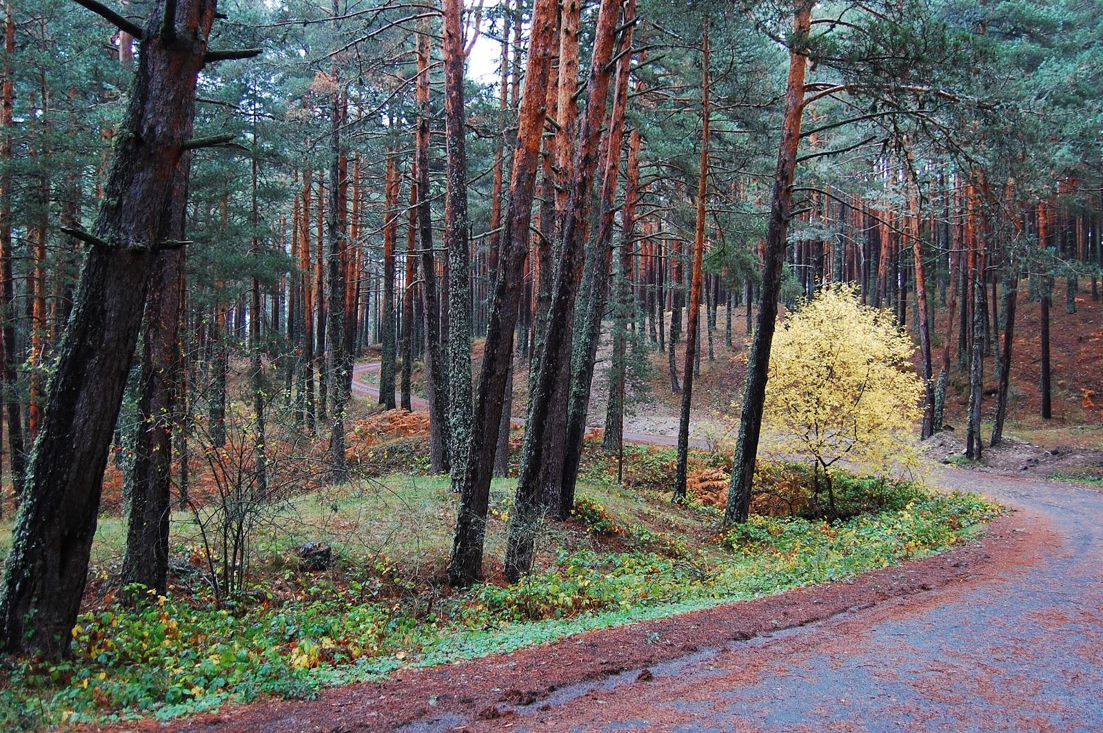 Blog Go Tandem - Subida por pista forestal