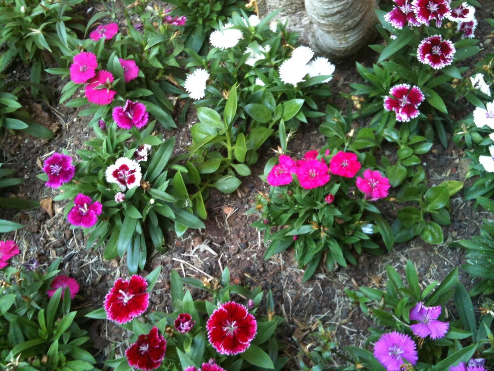 plantas jardim vertical meia sombra : plantas jardim vertical meia sombra:canteiro, ou no seu caso, a jardineira deve ser bem drenada. Deixe a