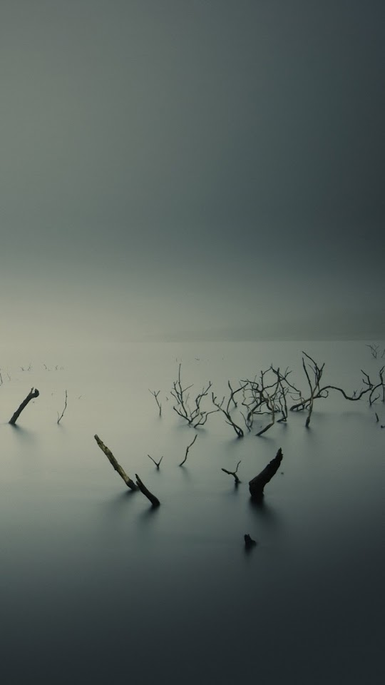 Calm Lake Overcast Dead Trees  Galaxy Note HD Wallpaper