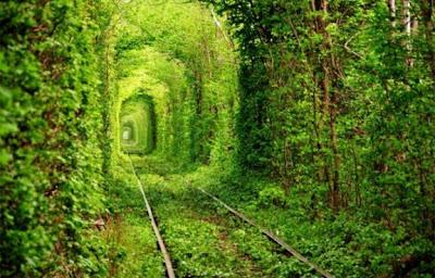 Inilah Terowongan Paling Romantis di Dunia