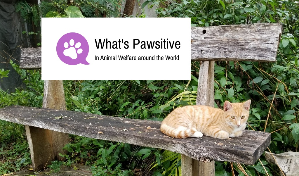 What's Pawsitive