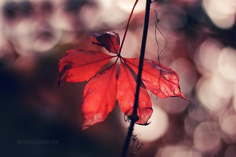 jesień, liście jesienne