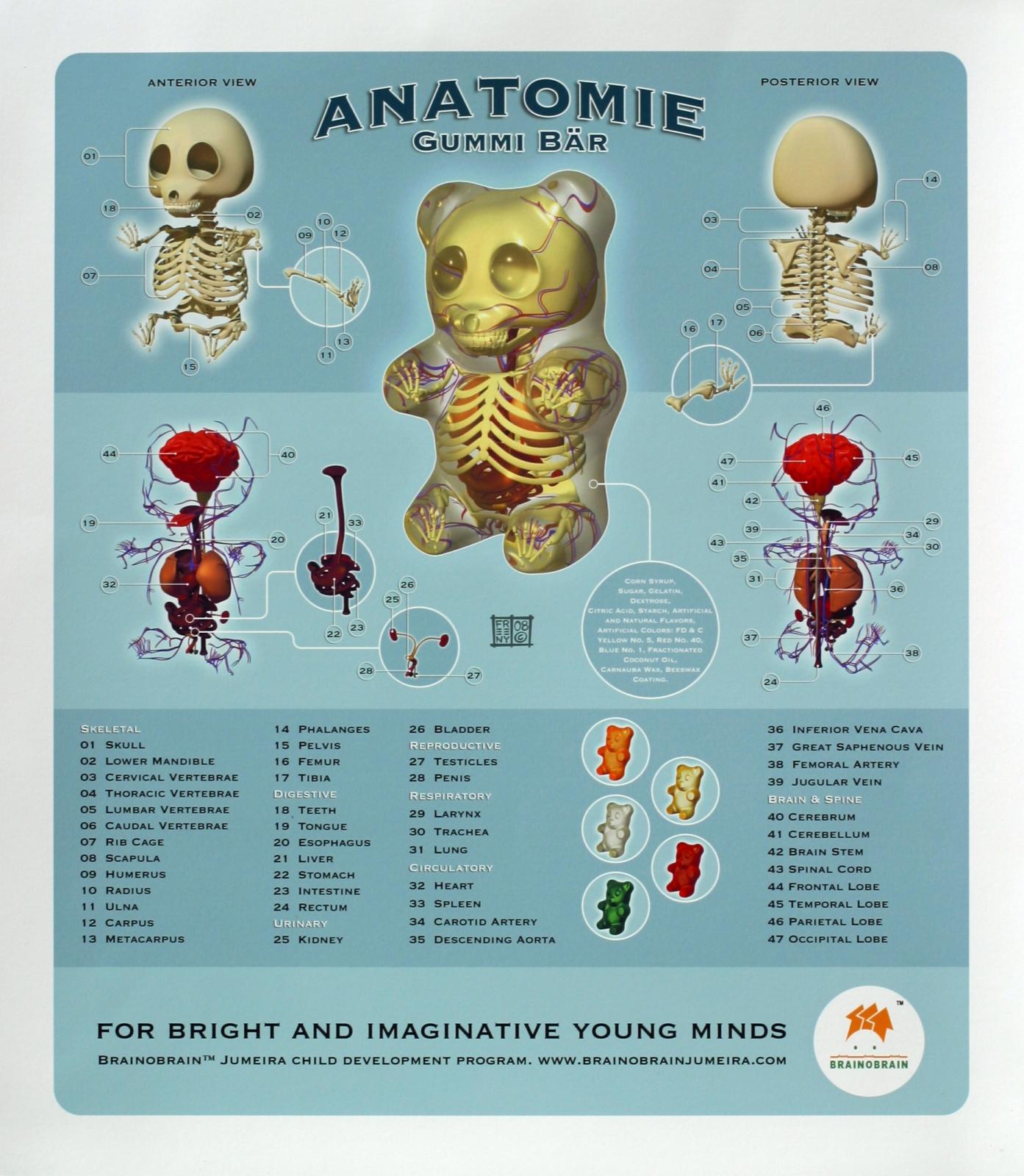 http://2.bp.blogspot.com/-mODps7VcQ0g/UJgYTAlOeGI/AAAAAAAAEL0/yh05koBfaeU/s1600/gummy_bear_anatomy_jason_freeny.jpg