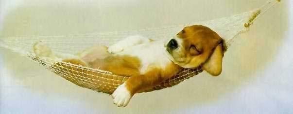 jeg er så træt hele tiden
