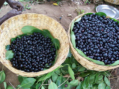 list of all fruits jamun fruit in usa