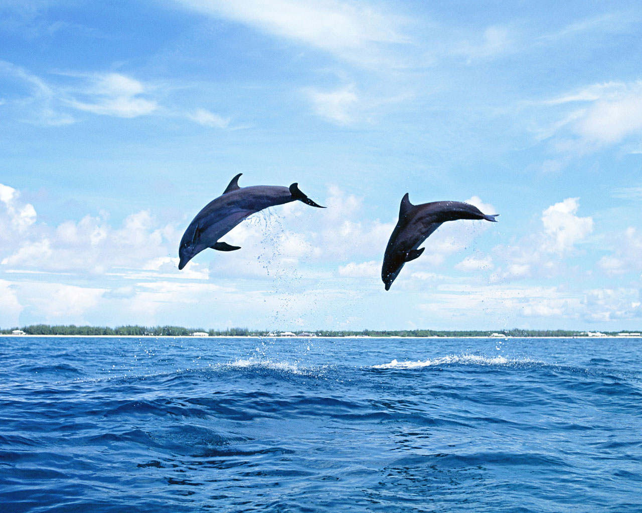 hd dolphin wallpaper landscape wallpapers hd wallpapers