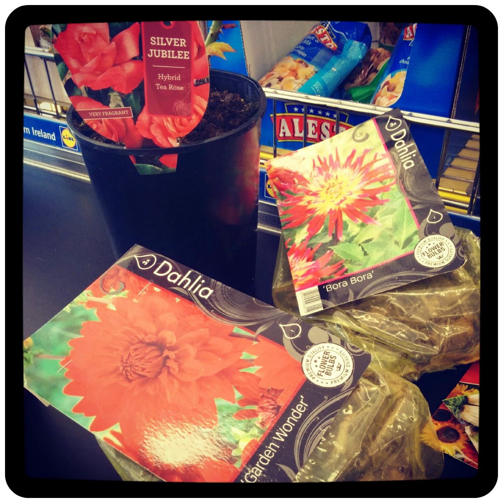 Day 1, cheap flowers - growourown.blogspot.com ~ alloment blog