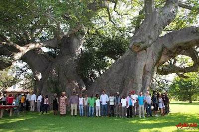 شجرة مجوفة، الغرائب والعجائب