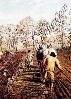 Pulling the plough, Horses were harnessed in single file for the autumn ploughing. In spring was harrowed to break up the clods before planting.