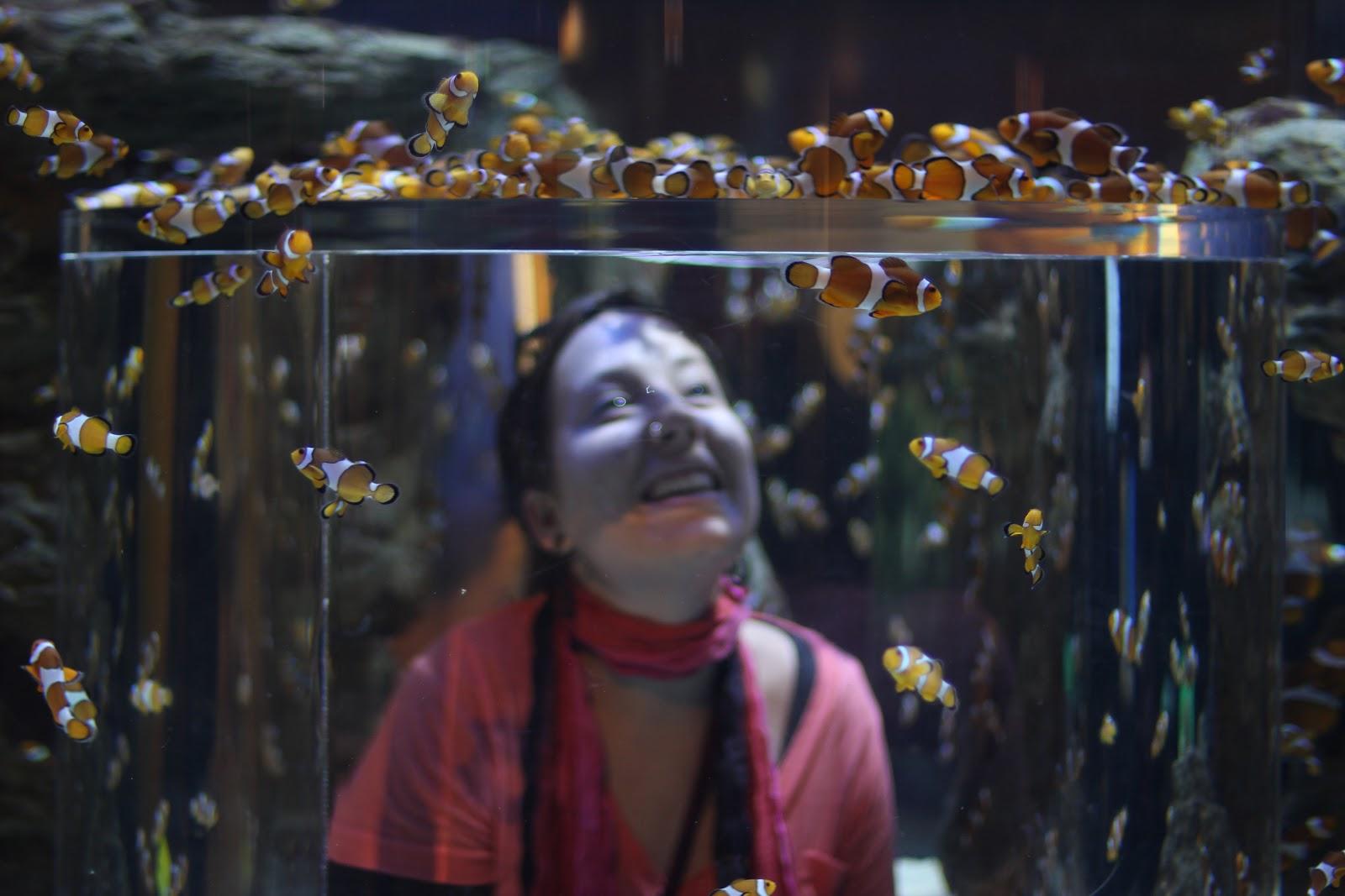Freshwater aquarium fish cape town - Jordan In Middle Of Clown Fish At The Aquarium Cape Town