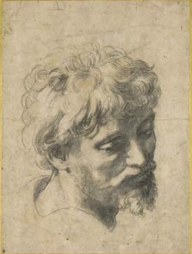 Raphaels renaissance sketch drawing head of an apostle