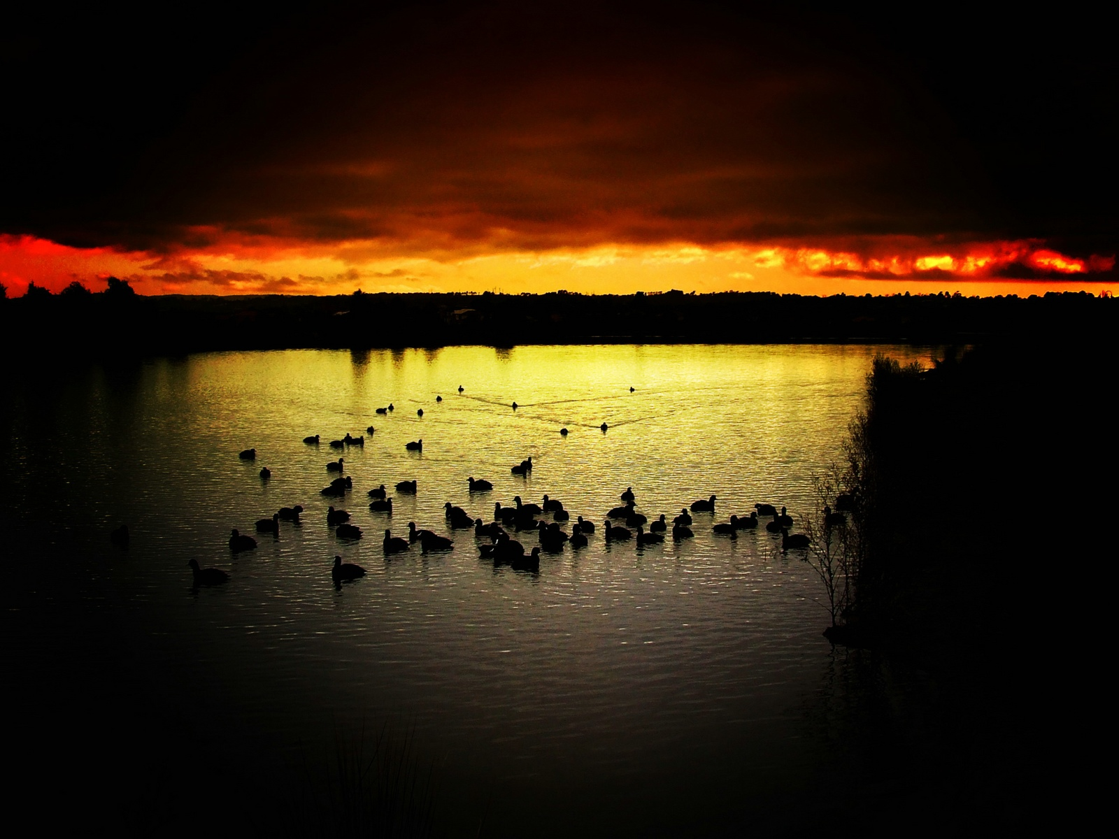 Best hd wallpapers new wallpapers pc wallpapers mobile for Wallpaper mobile home walls