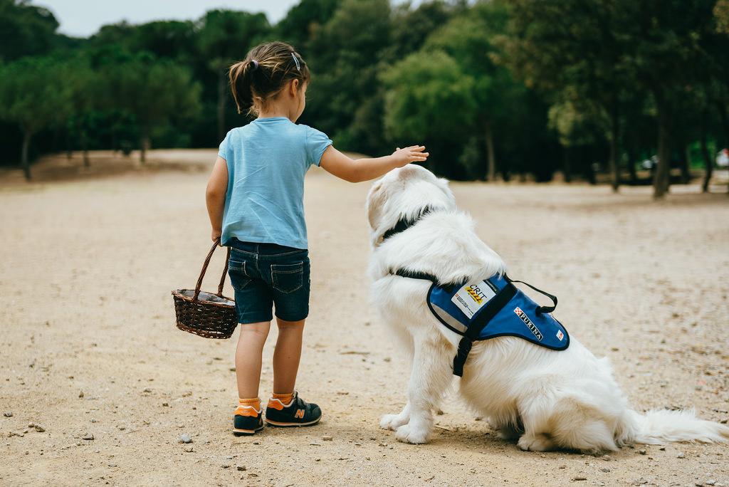 Perro de asistencia-Autismo