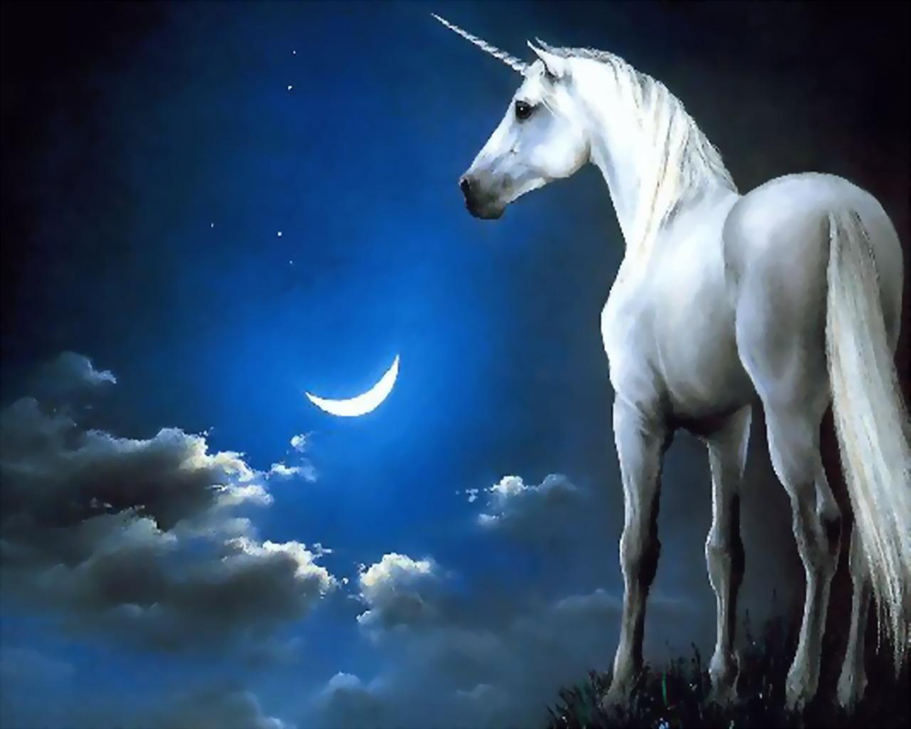http://2.bp.blogspot.com/-mQIF4Cn9Rmo/Tbq6wBctTfI/AAAAAAAATqg/HRHJkBS5E1k/s1600/unicornios%2B%252814%2529.jpg