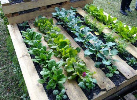 Micro Gardening | Prepper\'s Survival Homestead
