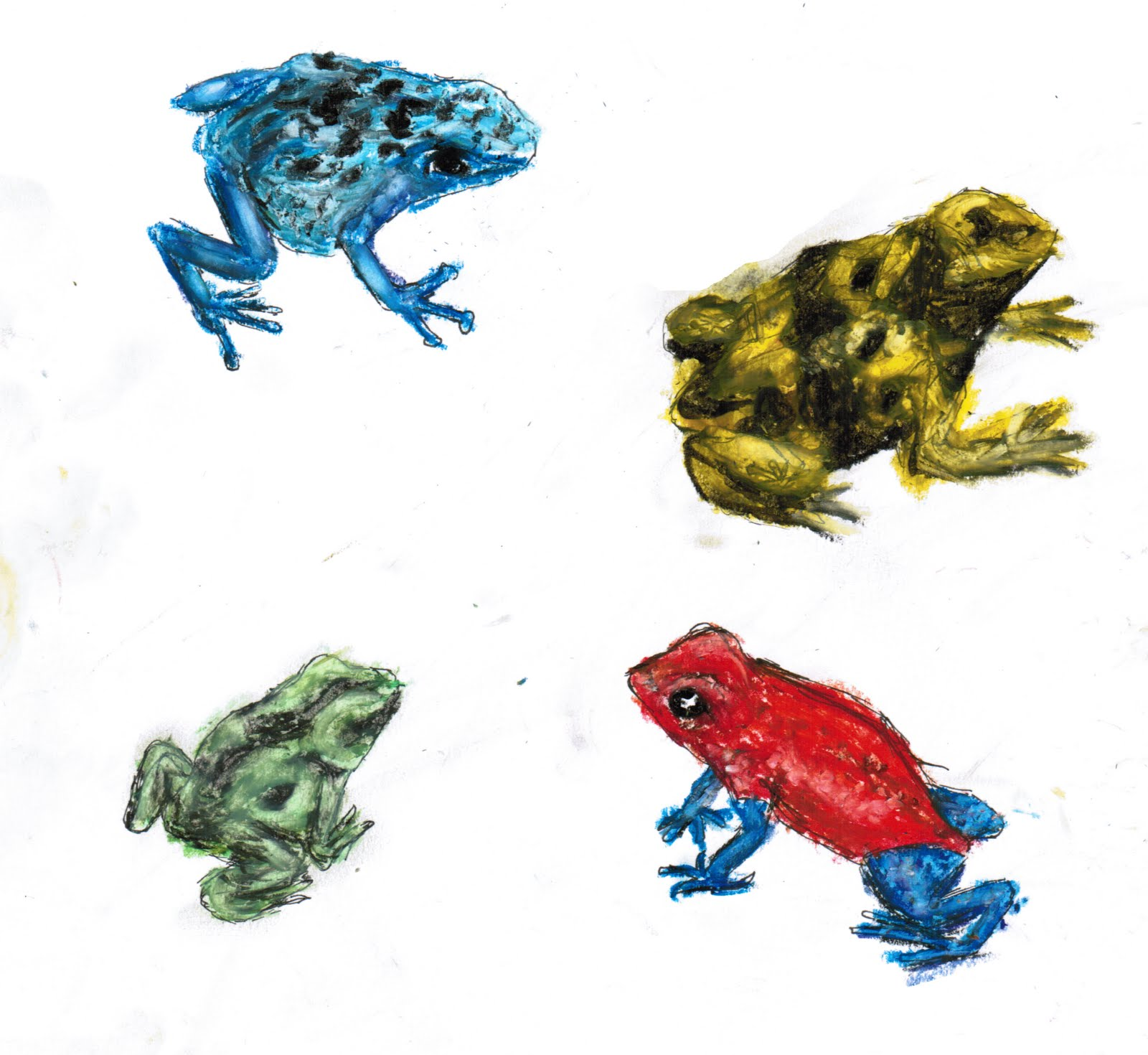 how to draw a dart frog