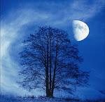 Deseos fugaces: Anoche viajé hasta el cielo...