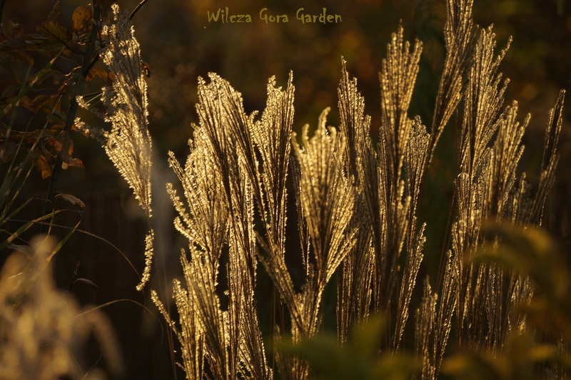 http://wilczagora.blogspot.com/2014/10/part-iv-autumn-is-house-of-gold.html