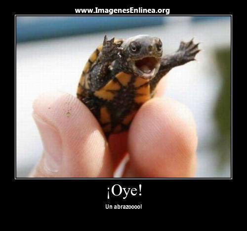 ¡Oye! Un abrazo....Imagenes graciosas de animales